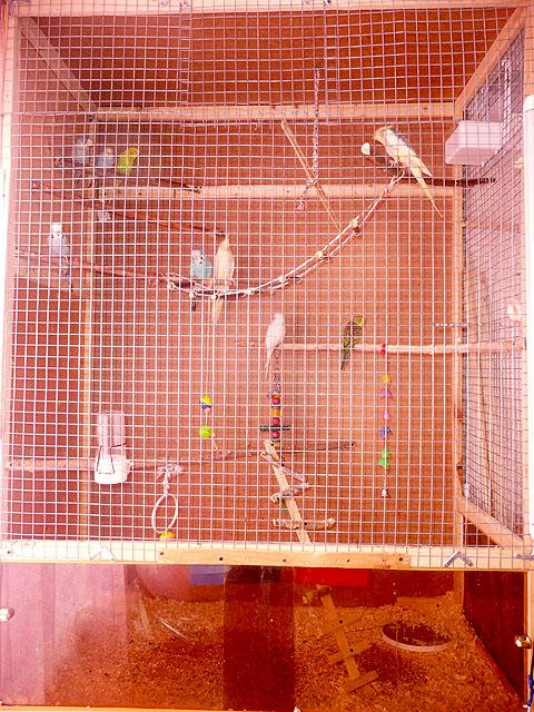 Как сделать вольер для волнистых попугайчиков